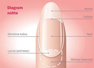 Diagram nohta